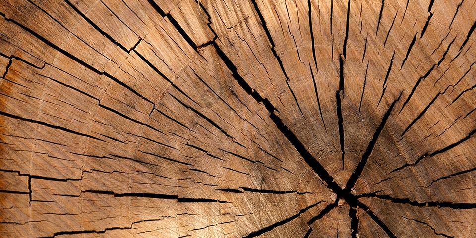 lumber-84678_1920-kopieren